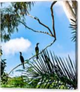 Neotropic cormorant Canvas Print