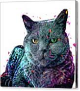 Olive Cat Canvas Print