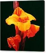 Orange Canna Canvas Print