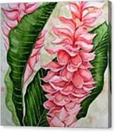 Pink Ginger Lilies Canvas Print