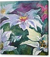 Poinsettias Canvas Print