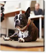 Portrait of curious dog lying on rug in an office Canvas Print