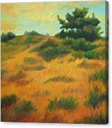 Province Lands Cape Cod Canvas Print