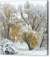 Quite Winter Beauty Canvas Print