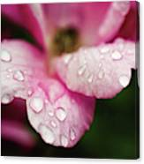Raindrops On Wild Pink Rose Botanical Floral Nature Photograph Digital Art By Melissa Fague