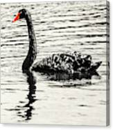 Reflective Black Swan Canvas Print