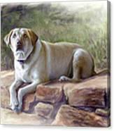 Restrained Energy- Yellow Labrador Retriever Portrait Canvas Print