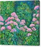 Rhododendron Near Black Rock Hill Canvas Print