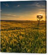 Scenic View Of Farm Against Sky During Sunset Canvas Print