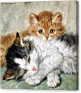 Sleeping kitten - Digital Remastered Edition Canvas Print