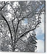 Southern Snow Tree Canvas Print