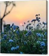 Sunset Behind Flowers Canvas Print