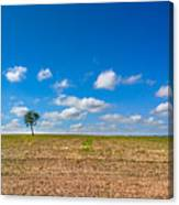 The loneliness of the tree in the middle of the soy plantation in the rural area of Piracicaba. Canvas Print