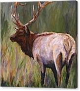 Whapiti - ELK Now Avaliable  Canvas Print
