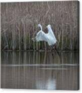 White Egret - 2 Canvas Print
