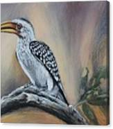 Yellow-billed Hornbill Canvas Print