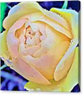 Yellow Rose Bud Canvas Print