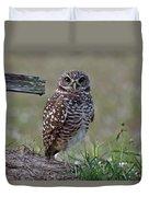Burrowing Owls - Watching You 3 Duvet Cover