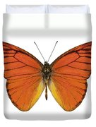 Orange Butterfly Species Appias Nero Neronis  Duvet Cover