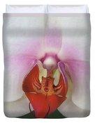 Phalaenopsis Orchid Closeup Duvet Cover