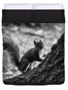 Squirrel In The Park V4 Duvet Cover