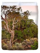 Weathered Tree Sunrise Canyon Dechelly Duvet Cover
