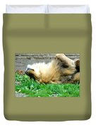 001 Lazy Boy At The Buffalo Zoo Duvet Cover