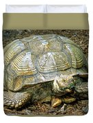 African Spurred Tortoise Duvet Cover