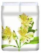 Alstroemeria Flowers Against White Duvet Cover