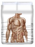 Anatomy Of Human Abdominal Muscles Duvet Cover
