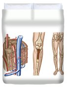 Anatomy Of Human Bone Marrow Duvet Cover