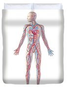 Anatomy Of Human Circulatory System Duvet Cover