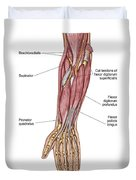 Anatomy Of Human Forearm Muscles, Deep Duvet Cover