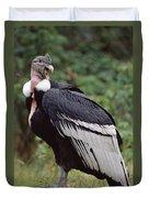 Andean Condor Male Cayambe Ecuador Duvet Cover