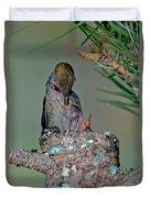 Annas Hummingbird Feeding Young Duvet Cover