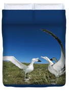 Antipodean Albatross Courtship Display Duvet Cover by Tui De Roy