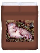 Baby Eastern Gray Squirrels Duvet Cover by Millard H. Sharp