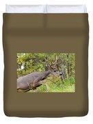 Beautiful Mule Deer Buck With Velvet Antler  Duvet Cover