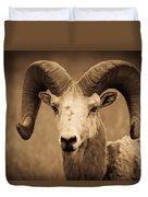 Big Horned Ram Duvet Cover
