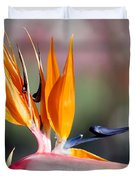Bird Of Paradise  Duvet Cover by Gunter Nezhoda