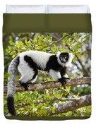 Black And White Ruffed Lemur Madagascar Duvet Cover
