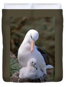 Black-browed Albatross With Chick Duvet Cover