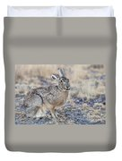 Black-tailed Jackrabbit Duvet Cover