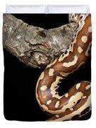 Blood Python Python Brongersmai Duvet Cover