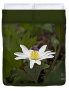 Bloodroot Wildflower - Sanguinaria Canadensis Duvet Cover