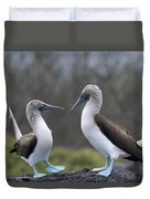 Blue-footed Boobies Courting Galapagos Duvet Cover