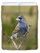 Blue Grosbeak Duvet Cover