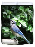 Blue Jay 1 Duvet Cover