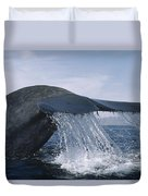 Blue Whale Tail Sea Of Cortez Mexico Duvet Cover