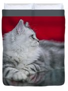 British Longhair Kitten Duvet Cover